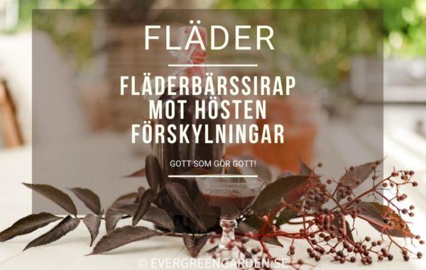 Recept på fläderbärssirap, Elderberrysyrup