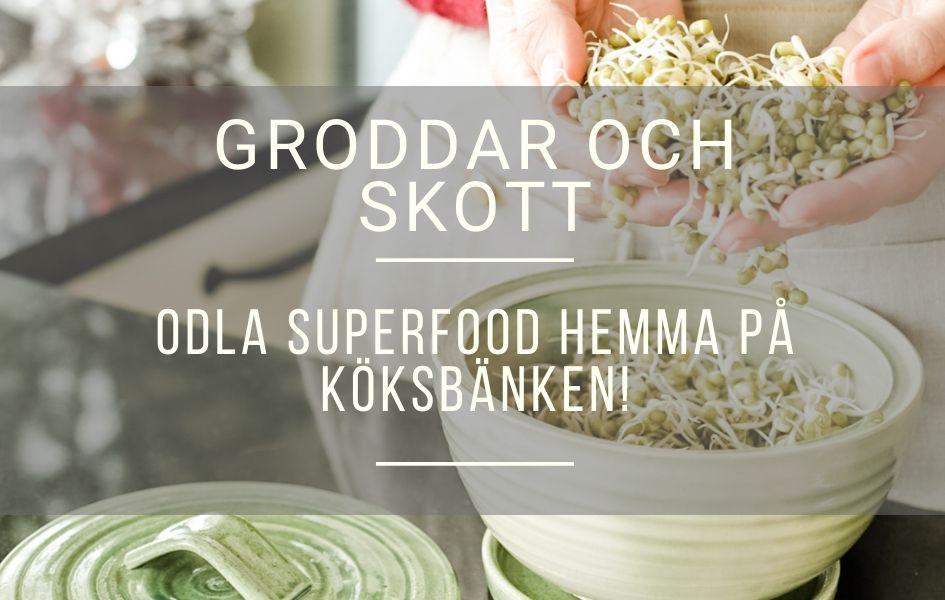 Groddar och skott – Odla superfood hemma på köksbänken!