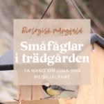 Småfåglar i trädgården – Ta hand om dina små medhjälpare