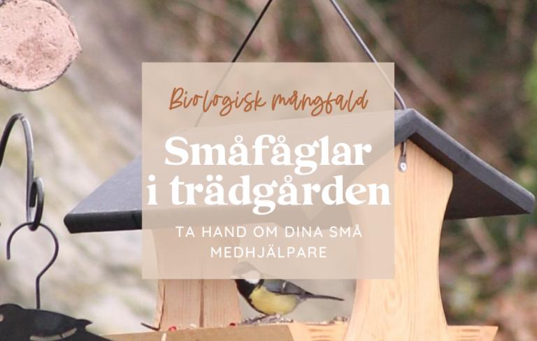 Småfåglar i trädgården