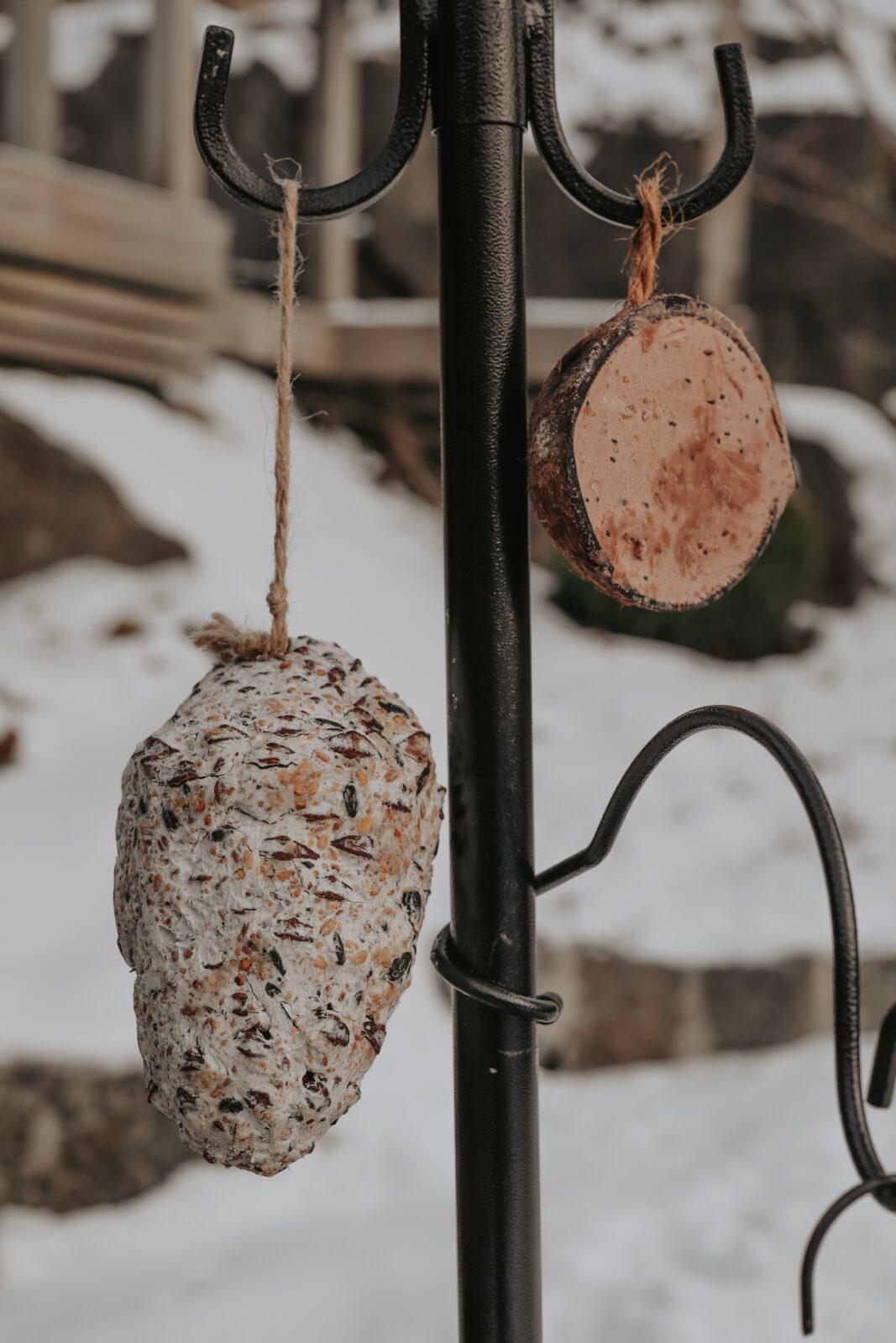 Fettkotte och kokosnöt fågelmat
