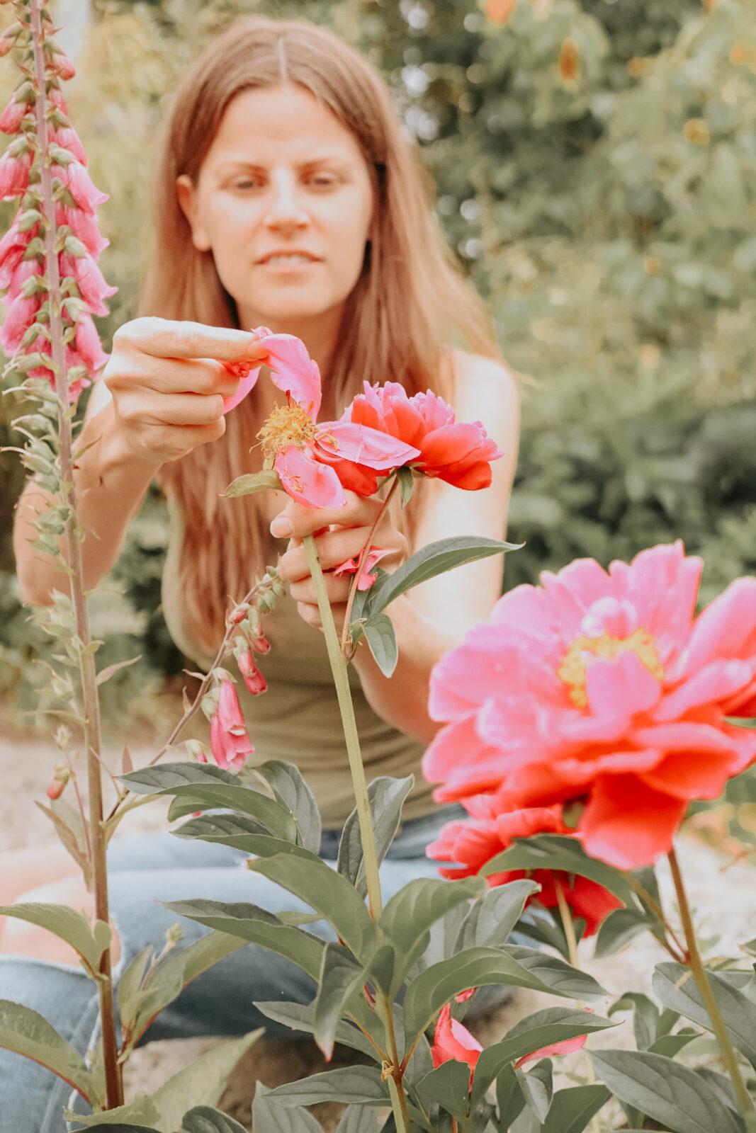 Skörda pionblad ätbara pioner