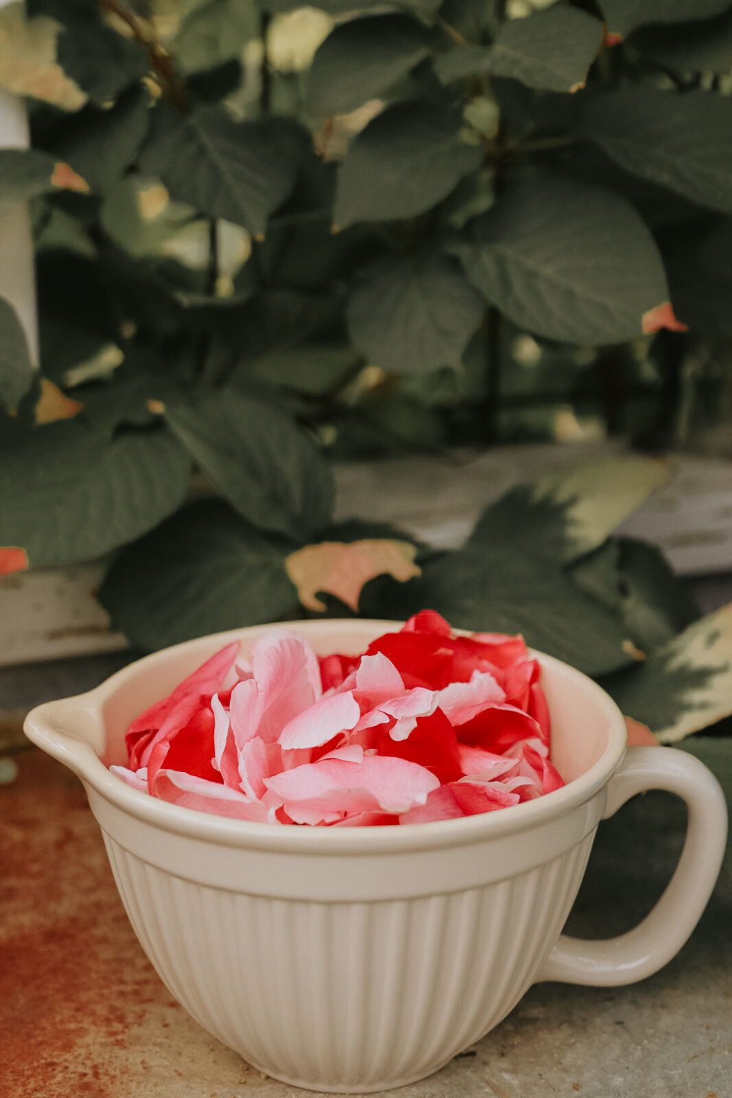 Peonie petals edible pionsirap