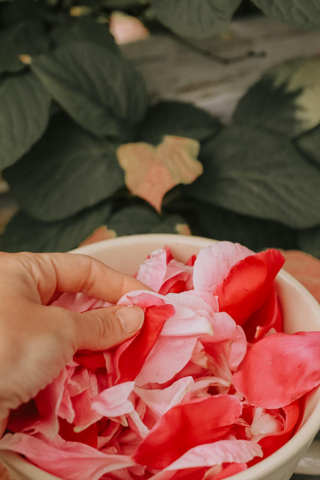 Pionblad blomblad pionsirap