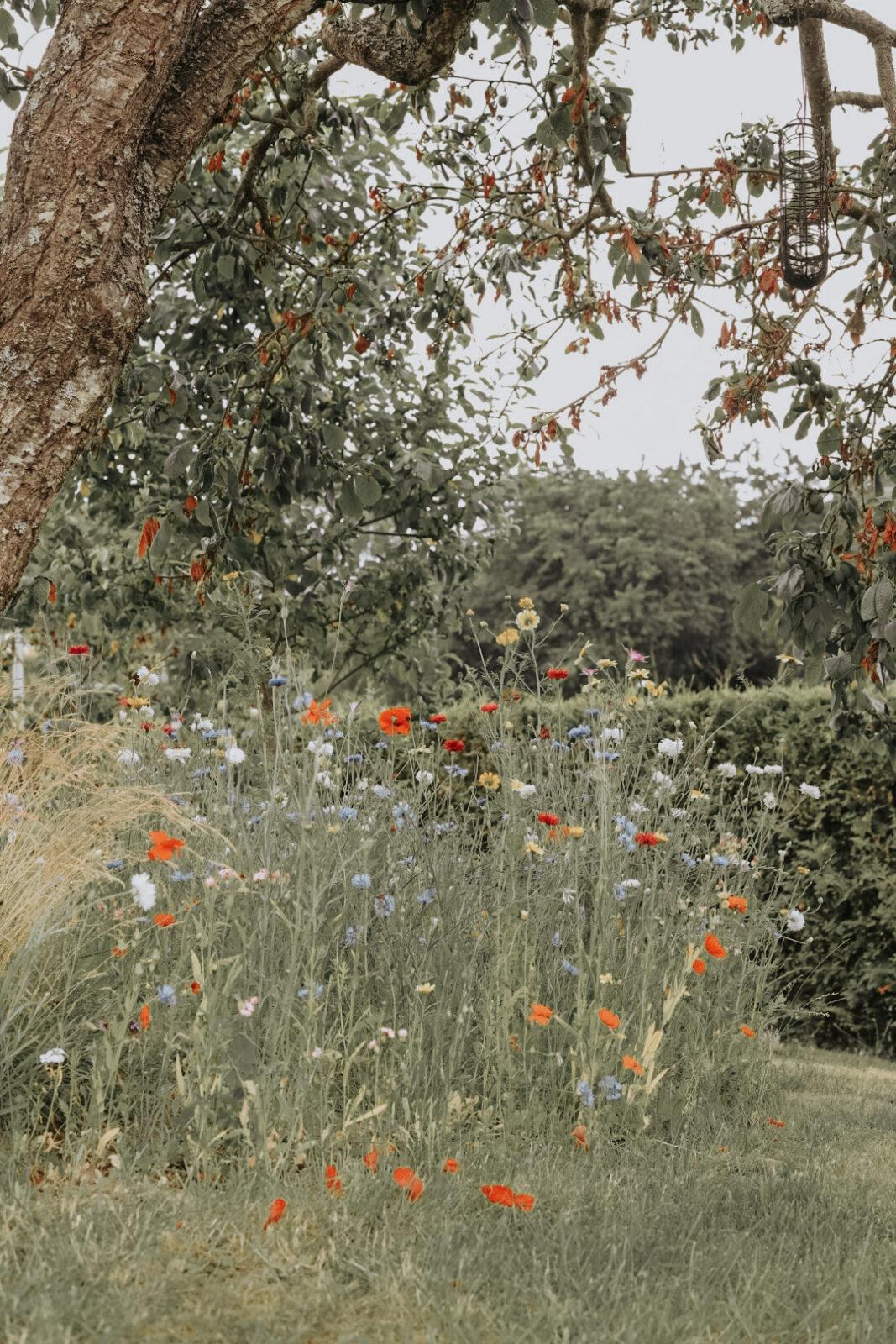 Nelson Garden ängsblommor